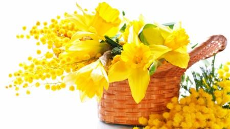 mimosa_flowers_yellow_85633_1920x1080-450x253