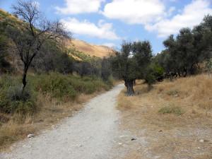 Старая дорога в Галилее
