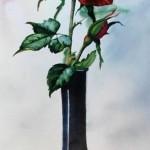 Вишнёвая роза