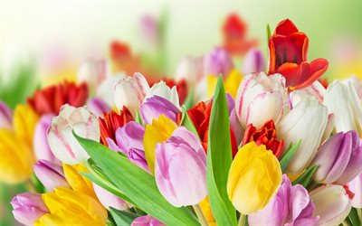 thumb-multicolored-tulips-spring-blur-bouquet-tulips